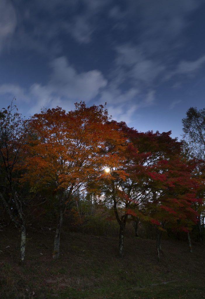 夕暮れのこだまの森