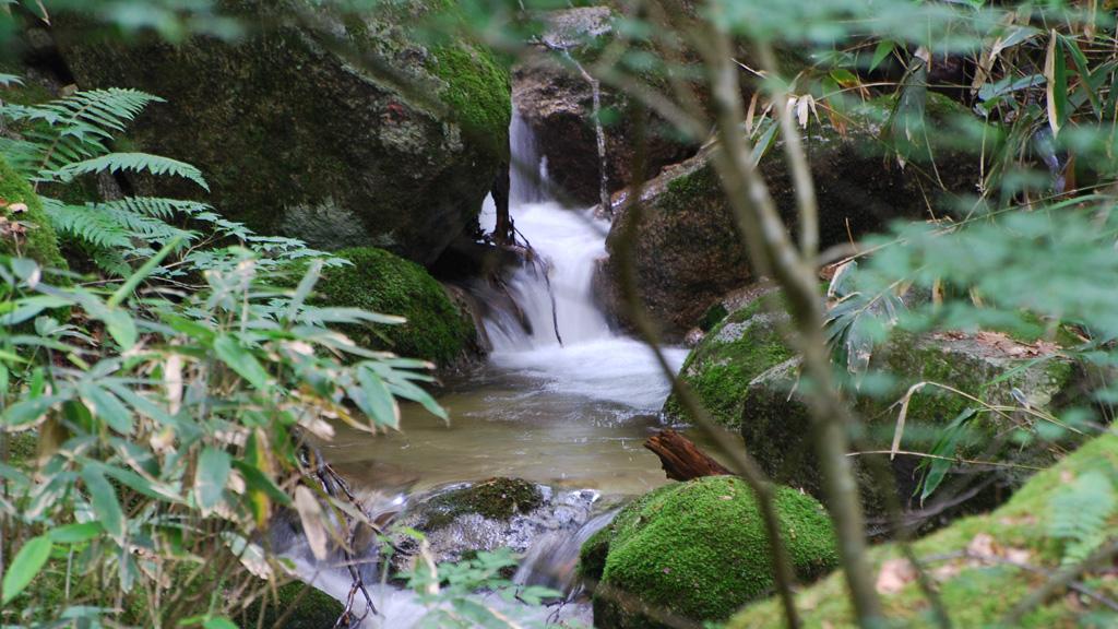 水木沢天然林(周辺ガイド)